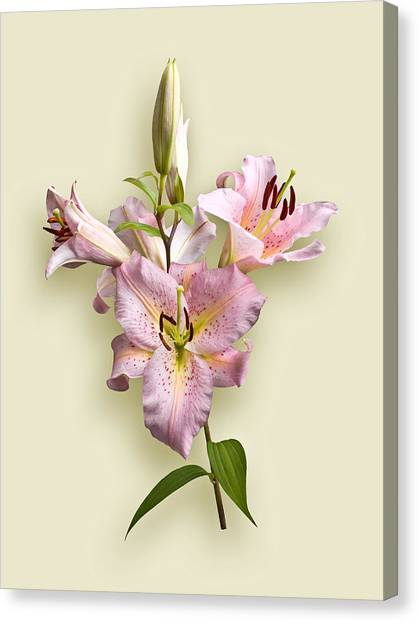 Pink Lilies On Cream Canvas Print