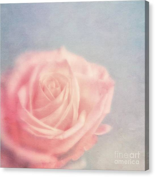 Rose Canvas Print - pink moments I by Priska Wettstein