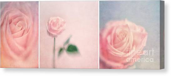 Rose Canvas Print - Pink Moments by Priska Wettstein