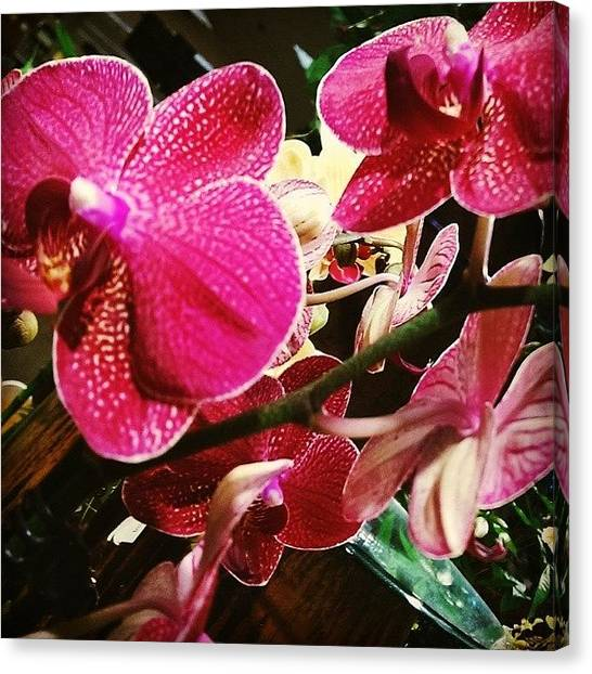 Palm Trees Sunsets Canvas Print - Pink Orchids by Myrna Fernandez
