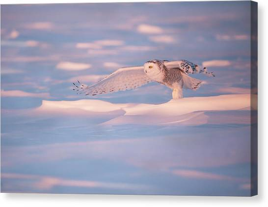 Quebec Canvas Print - Pink Owl by Marco Pozzi