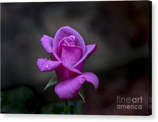 Pink Passion Canvas Print