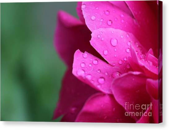 Canvas Print featuring the photograph Pink Peony  by Ann E Robson