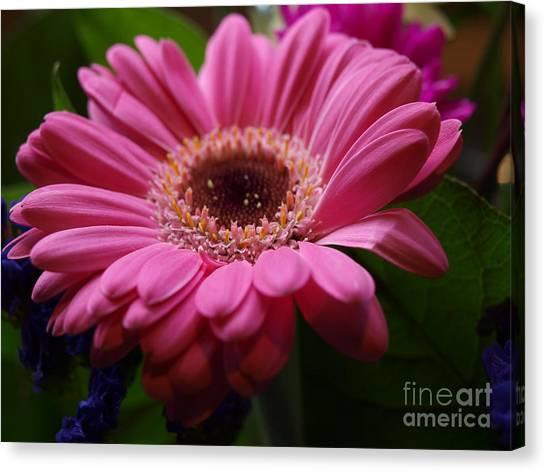Pink Petal Explosion Canvas Print
