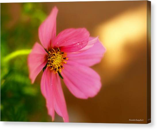 Pink Petals Canvas Print by Alexandra  Rampolla