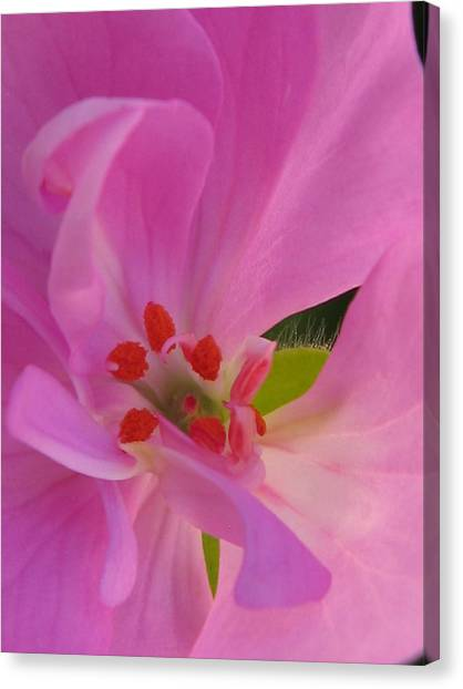Pink Petals II Canvas Print by Tracy Male