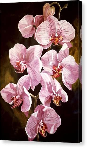 Pink Phalaenopiss Orchids Canvas Print