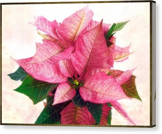 Pink Poinsettia Canvas Print