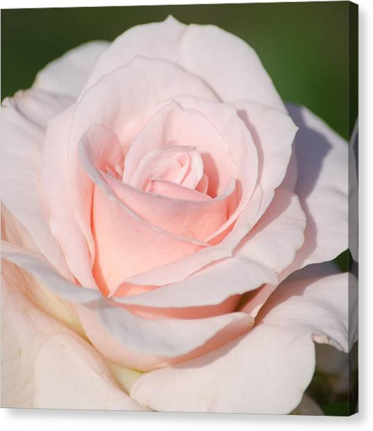Pink Promise Canvas Print by Nancy Edwards