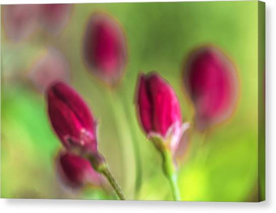 Pink Red Buds Canvas Print