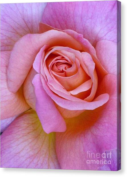 Pink Rose Close-up Canvas Print