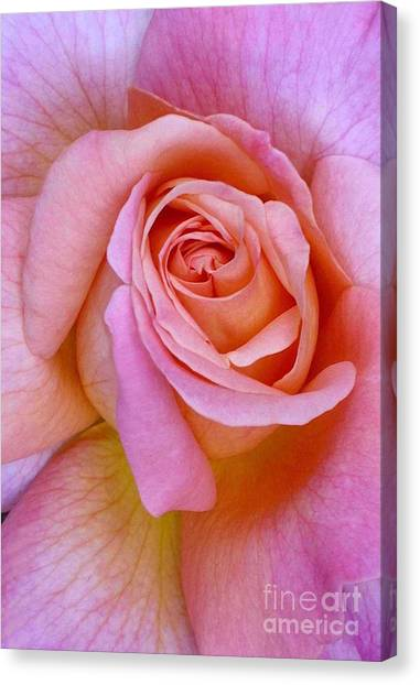 Pink Rose Closeup II Canvas Print