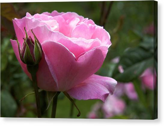 Pink Rose Canvas Print by Terry Horstman