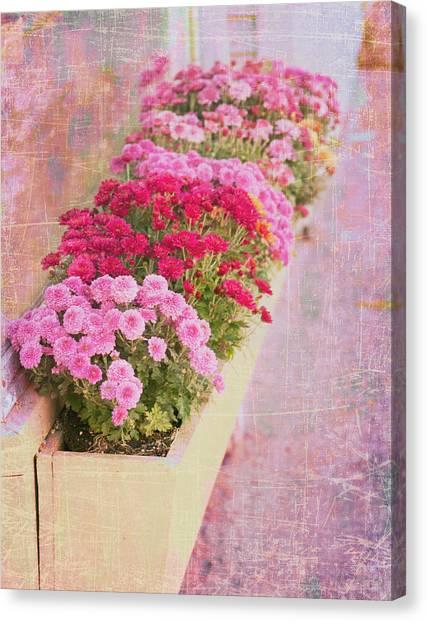 Pink Sidewalk Flowerbox Canvas Print