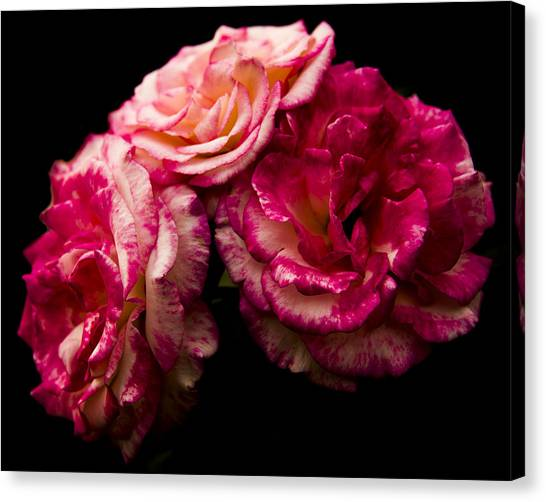 Pink Solitude Canvas Print