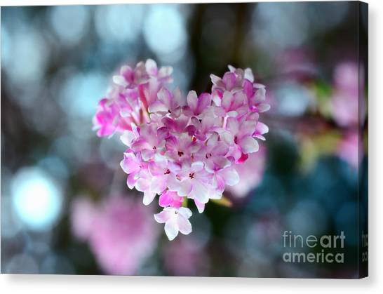 Pink Spring Heart Canvas Print