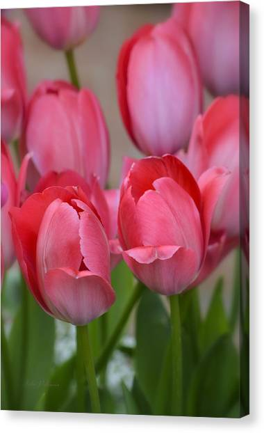 Pink Spring Tulips Canvas Print