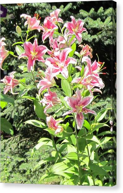 Pink Stargazer Lilies-greeting Card Canvas Print