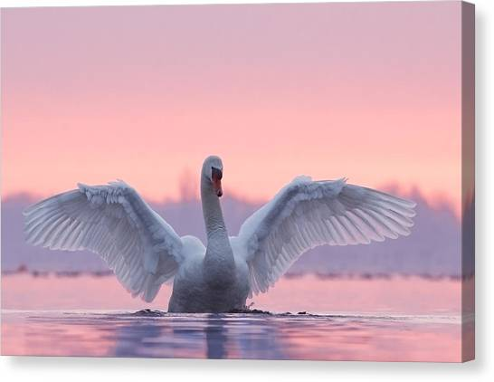 Pink Canvas Print - Pink Swan by Roeselien Raimond