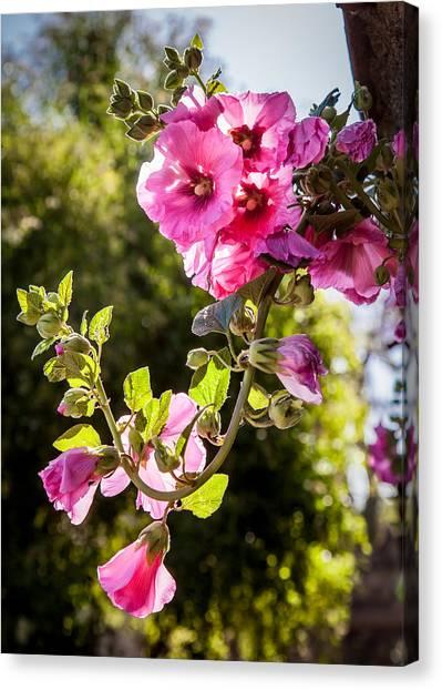 Pink Trumpet Canvas Print