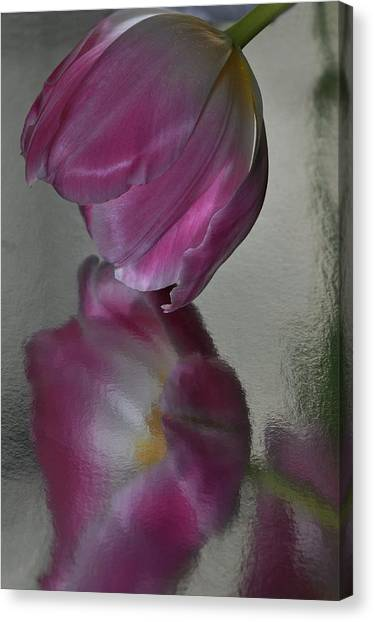 Pink Tulip Reflected In Silver Water Canvas Print