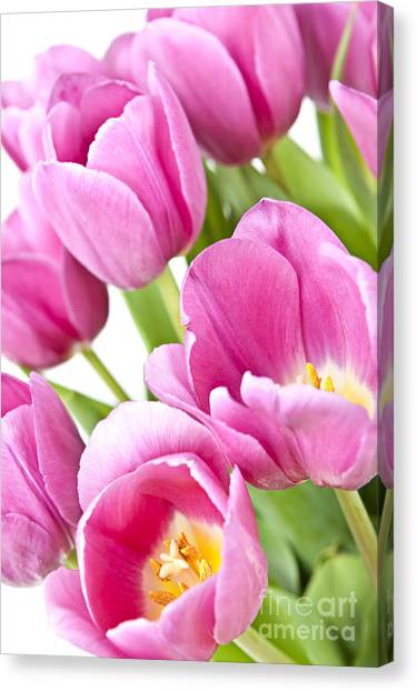 Perennial Canvas Print - Pink Tulips by Elena Elisseeva