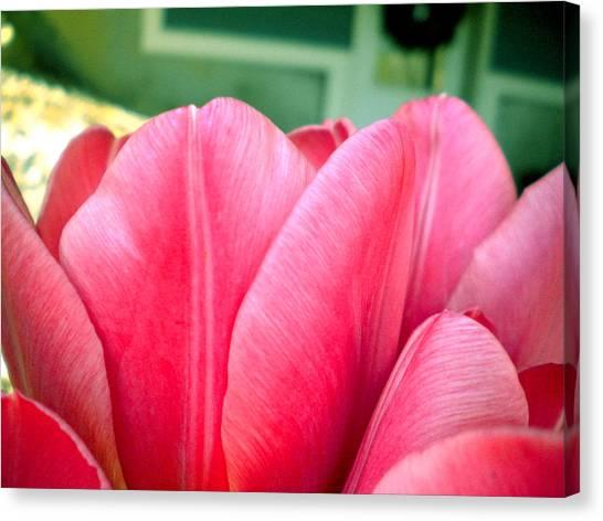 Pink Tulips Canvas Print by Elizabeth Fredette