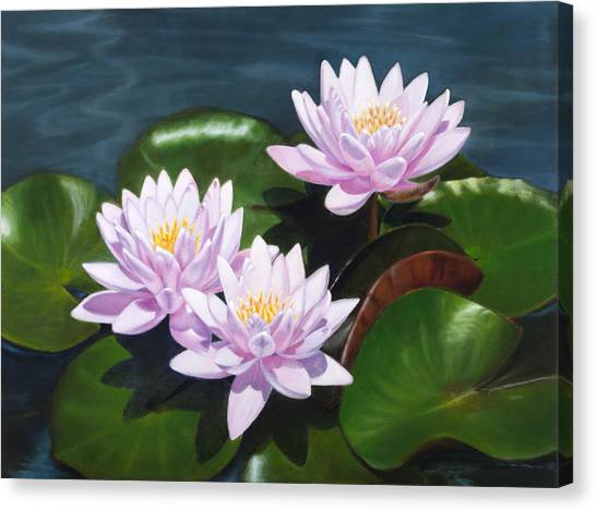 Pink Water Lilies - Oil Painting On Canvas Canvas Print