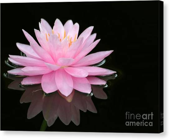 Pink Water Lily In A Dark Pond Canvas Print