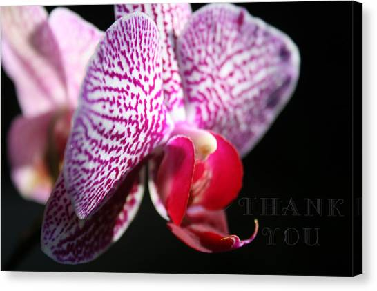 Orchids Canvas Print - Pink White Orchid 2 And A Reminder To Utter The Words Thank You. by Raenell Ochampaugh