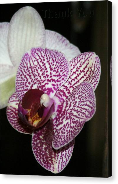 Orchids Canvas Print - Pink White Orchids 2 And A Reminder To Utter The Words Thank You. by Raenell Ochampaugh