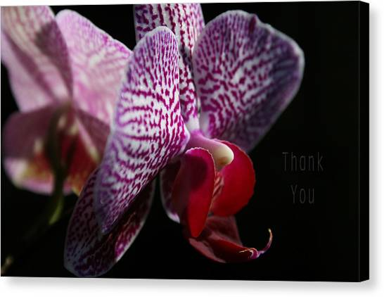 Orchids Canvas Print - Pink White Orchids And A Reminder To Utter The Words Thank You. by Raenell Ochampaugh
