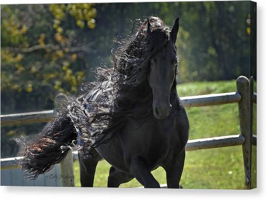 Black Stallion Canvas Print - Pinnacle Of Friesians by Pinnacle Friesians