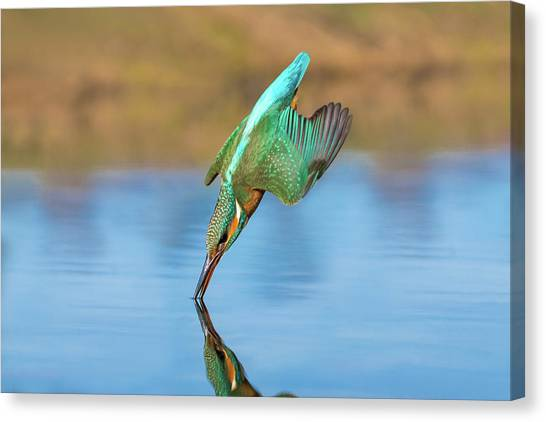 Kingfisher Canvas Print - Pinpoint by Petar Sabol