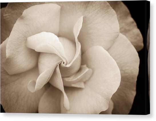 Pinwheel Rose Canvas Print