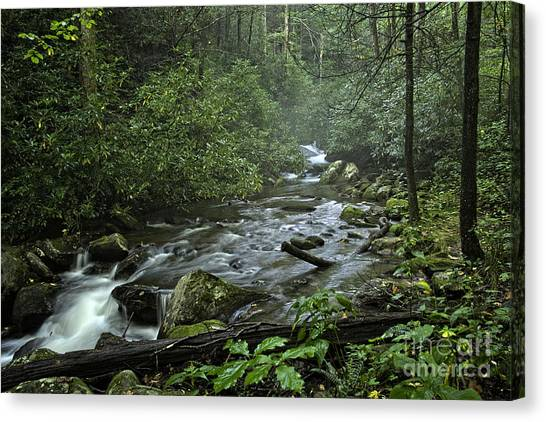 Pisgah Forest  Canvas Print