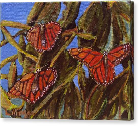Pismo Monarchs Canvas Print