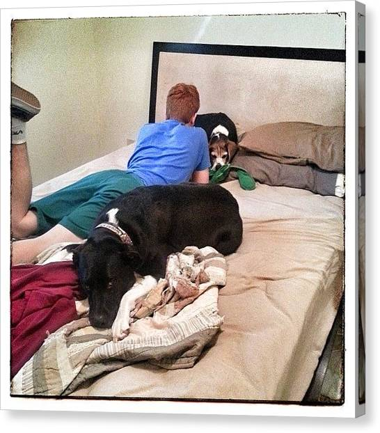 Beagles Canvas Print - #pitbull  #beagle  #stepson  #brothers by Woof Glaser