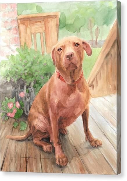 Pitbull Watercolor Portrait Canvas Print by Mike Theuer