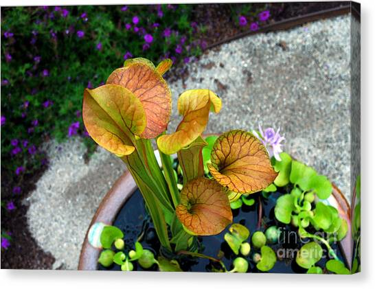 Pitcher Plants Canvas Print