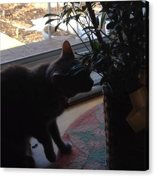 Kittens Canvas Print - #pixie Investigates Daddy's New Plant by Teresa Mucha