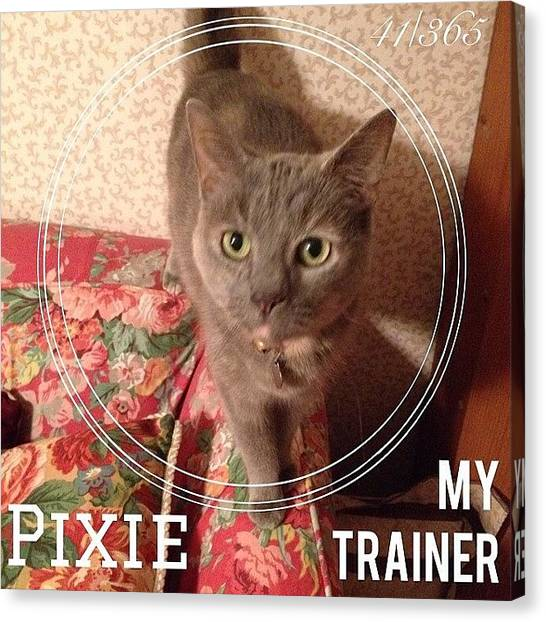 Kittens Canvas Print - #pixie Is My Official #trainer While I by Teresa Mucha