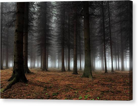 Foggy Forests Canvas Print - Place Of Silence by Dragisa Petrovic