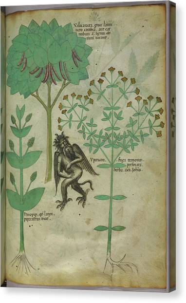 Mythological Creatures Canvas Print - Plant And A Demon by British Library