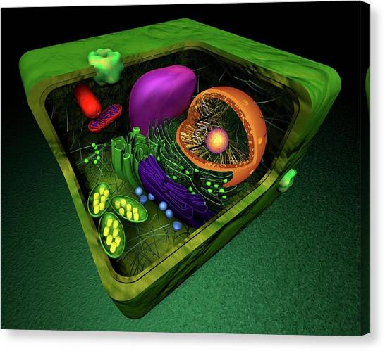 Nuclear Plants Canvas Print - Plant Cell by Sci-comm Studios