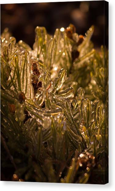 Plant Covered In Ice Canvas Print