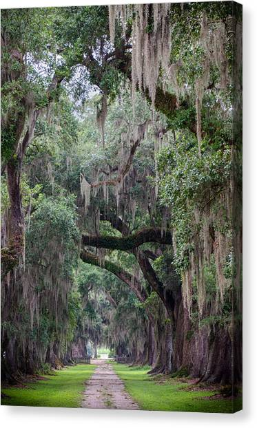 Plantation Path Canvas Print