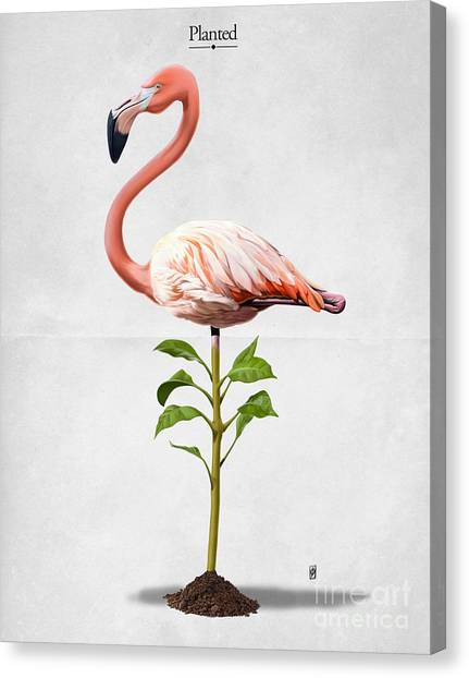 Planted Canvas Print