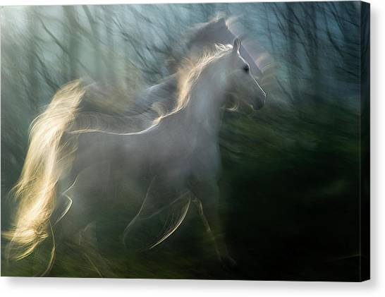 White Horse Canvas Print - Play Graund by Milan Malovrh