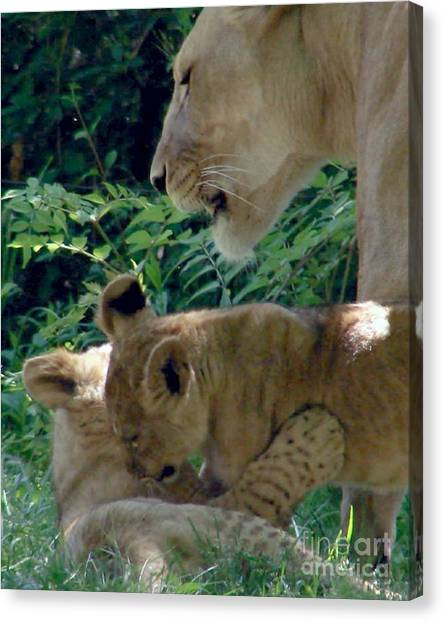 Playful Cubs Canvas Print